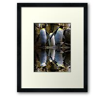 King Penguin, Antarctic, Montreal Biodome Framed Print