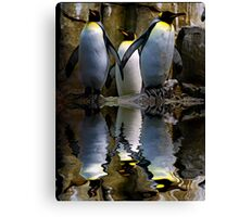King Penguin, Antarctic, Montreal Biodome Canvas Print
