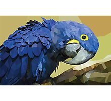 blue macaw low poly Photographic Print
