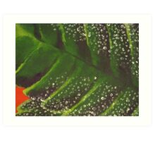 Leaf, close up. Art Print