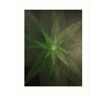 Plant close up overhead. Art Print