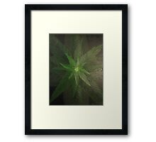 Plant close up overhead. Framed Print