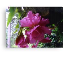 Cascading Ruffled Begonia Canvas Print