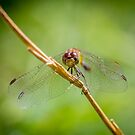 Dragonfly by Keith G. Hawley