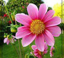 A Sunny Corner of a Tyneside Garden by BlueMoonRose