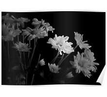 Emerging Daisies In Black and White Poster