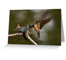 Swallows Feeding Greeting Card