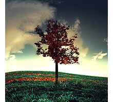 The Red Tree Photographic Print