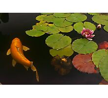 Orange Koi And Flower Photographic Print