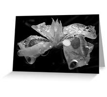 Soaking wet - BW Greeting Card