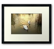 Perfect Partners .. Framed Print