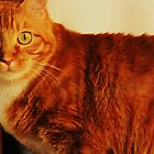 This Is Punkin by Ginger  Barritt