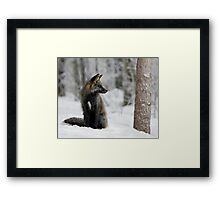 Silver Fox in Snow Framed Print