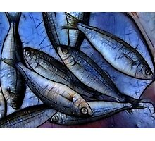 Fresh Fish Photographic Print