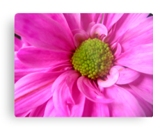 Neon Pink Daisy Metal Print
