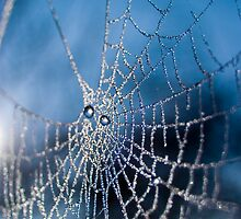 Frosted Cobweb by Kevin Jones