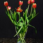 Tulips on Black by stephen Spindler