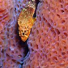 Rare Reef Scorpion Fish by A.M. Ruttle