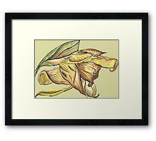 Messy daffodil painting Framed Print