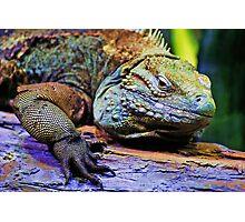 Iggy The Iguana Photographic Print
