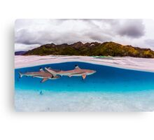 Reef shark Canvas Print