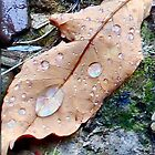 After the rain by Sheri Nye