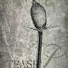 Teasel by cdwork