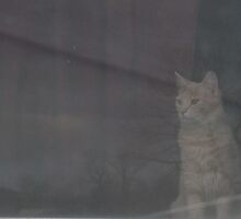 How much is that cat in the window? by Terry Schock