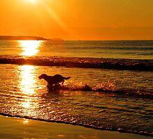 Sunrise Playtime by Poete100