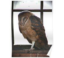 PNW Raptor - Barn Owl Poster