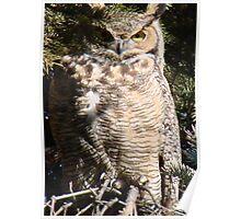 PNW Raptor - Great Horned Owl2 Poster
