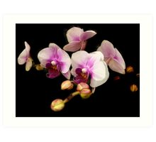My first orchid photo Art Print