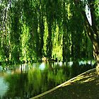 Under the Willow by tammyins