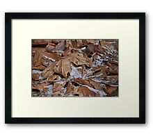 Light snow, frost and dried leaves Framed Print