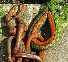 Teardrop link by Sue Purveur