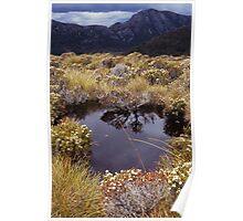 Alpine pond - Table Mountain, Tasmania Poster
