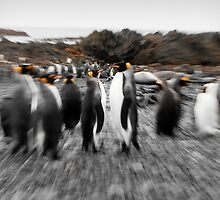 Penguin Stand-Off by Phill Danze