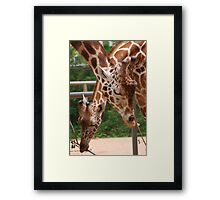 Everyone Needs Love Framed Print