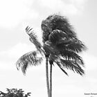 Palm tree in the wind by Kasper