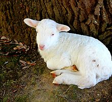 Little Lamb by Darlene Lankford Honeycutt