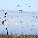 Bald Eagle and Snow Geese by Kimberly Palmer