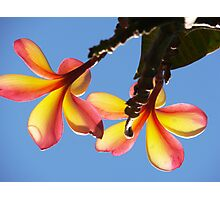 Frangipani Fruits Photographic Print