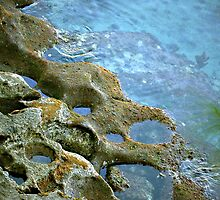 Tidal pool by triciamary