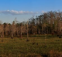 Panoramic of Big Cypress National Preserve, Florida by Tomas Abreu
