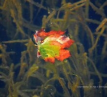 Floating Leaf | Center Moriches, New York  by © Sophie W. Smith