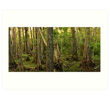 Panoramic of Big Cypress National Preserve II, Florida Art Print