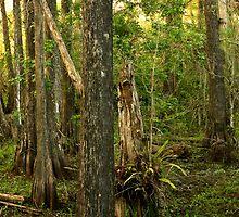 Panoramic of Big Cypress National Preserve II, Florida by Tomas Abreu
