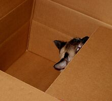 Cat In The Box: I'm Serious!  Is Anyone Out There? by Rebecca Bryson