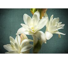 Tuberose Photographic Print