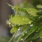 morning rain by tshobe